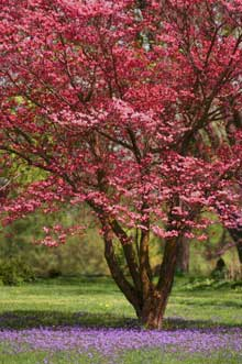 Choosing Plants Popes Gardens